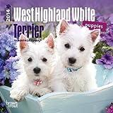 West Highland White Terrier Puppies 2014 Calendar 18 Month