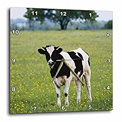 3dRose USA, Texas, Lytle, Cow in Field of Wildflowers - Wall Clock, 10 by 10-Inch (dpp_207683_1)