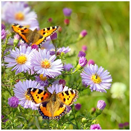 - Earthcare Seeds Butterfly Garden Flower Seeds 1,000 Seeds - Heirloom - Open Pollinated - Non GMO