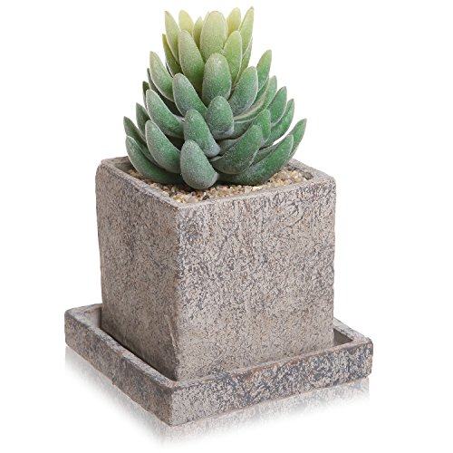 Decorative Cement Textured Succulent Draining