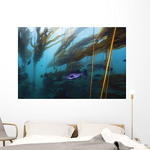 Underwater Wall Murals - Black Rockfish Hover in a Strong Current in a Forest of Bull Kelp - 60 inches x 40 inches - Peel and Stick Removable Graphic