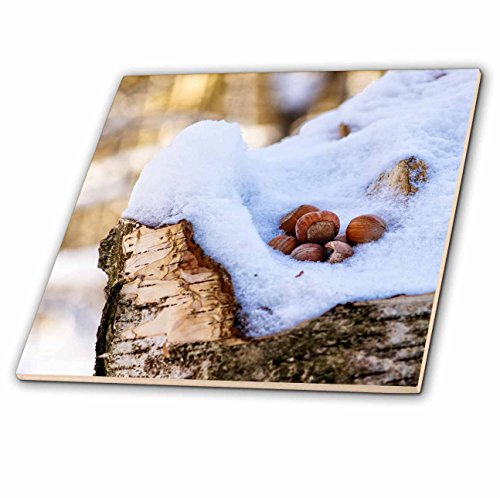 3dRose Alexis Photography - Seasons Winter - Hazel or filbert nuts in a snow on a birch tree stump, winter forest - 6 Inch Glass Tile -