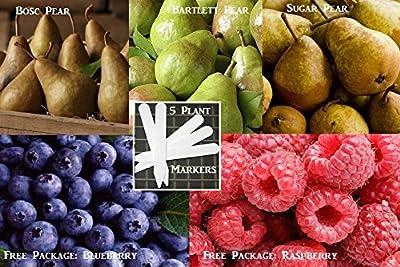 Bulk 3 Pear Tree Seeds Survival Seeds 280 Pear Seeds Upc 648620998231 + 5 Plant Markers Bosc Pear Bartlett Pear