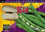 Bean (Life Cycles)
