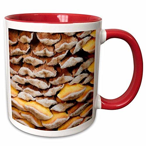 3dRose Danita Delimont - Flora - Sago palm flora, Savannah, Georgia, USA - US11 JWL0576 - Joanne Wells - 15oz Two-Tone Red Mug (mug_143781_10)