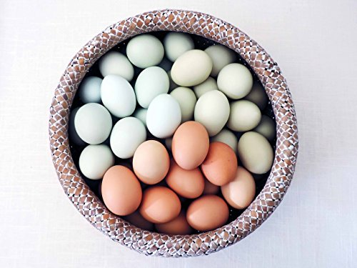 Hand Blown Free Range Chicken Easter Eggs | Light Mix - Blue, Green, Brown, | Primitive, Natural Rustic Farmhouse, Cottage Chic Décor, Wedding Baptism Decor, One Dozen (12) Egg