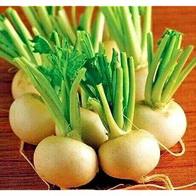 Hakurei Hybrid Japanese White Turnip Seeds - Smooth, Sweet and mild Flavor (100 Seeds) : Garden & Outdoor