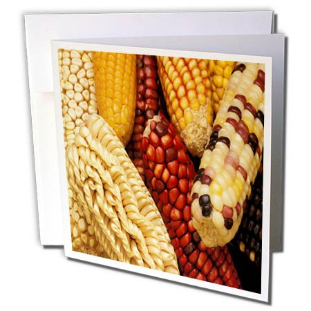 3dRose TDSwhite – Farm and Food - Food Corn Ears Multicolored Healthy - 12 Greeting Cards with Envelopes (gc_285126_2) by 3dRose