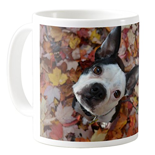 Hound Dog Sweet Tea - AquaSakura - Sweet Dog In The Leaves - 11oz Ceramic Coffee Mug Tea Cup