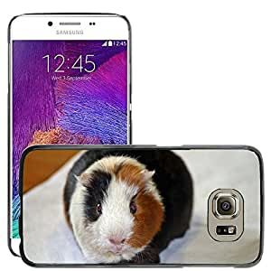 Hot Style Cell Phone PC Hard Case Cover // M00109042 Guinea Pig Amanda From The Front // Samsung Galaxy S6 (Not Fits S6 EDGE)