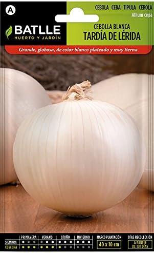 Semillas Hortícolas - Cebolla Colorada de Figueras sel. Ampurdan ...