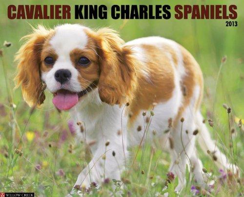 Spaniel 2013 Calendar - Cavalier King Charles Spaniels 2013 Wall Calendar