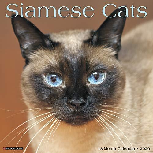 Siamese Cats 2020 Wall Calendar ()