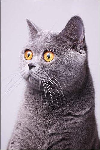 Znalezione obrazy dla zapytania oops cat