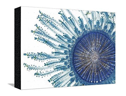 Canvas Print Wall Art 'The Pigment of a Blue Button Jellyfish Blocks Ultraviolet Rays' by David Liittschwager, 12x16 in