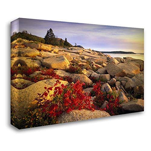 (Atlantic Coast Near Thunder Hole, Acadia National Park, Maine 38x28 Gallery Wrapped Stretched Canvas Art by Fitzharris, Tim)