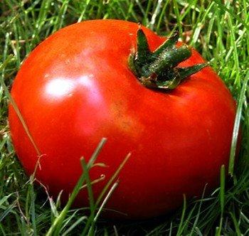 - Kazakhstan Giant Tomato 10 Seeds - Borat Old Country