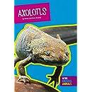 Axolotls (Weird and Unusual Animals)