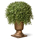 National Tree 26 Inch Argentia Plant in Gold Urn (LAR4-701-26)