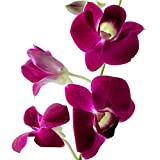 Dendrobium Orchids Purple