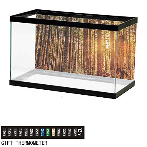 wwwhsl Aquarium Background,United States,Tall Trees Red Woods Forest Humboldt California Sequoia Picture,Orange Dark Brown Green Fish Tank Backdrop 30