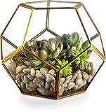 KooK Gold Modern Geometric Terrarium, Succulent,