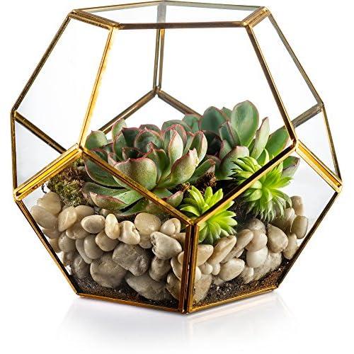 Cheap KooK Gold Modern Geometric Terrarium, Succulent,