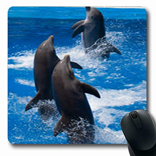 Pandarllin Mousepads Swim Dolphins Frolic Blue Clear Happy Water Selective Wildlife Nature Oblong Shape 7.9 x 9.5 Inches Oblong Gaming Mouse Pad Non-Slip Rubber Mat