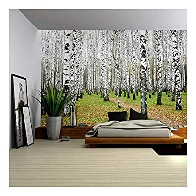 Grand Expert Craftsmanship, A Small Pathway in a Tall Brich Tree Forest Wall Mural, Quality Creation