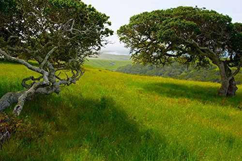 Arroyo Laguna Oaks Vista Fine Art Photo Big - Pictures Vista Nude