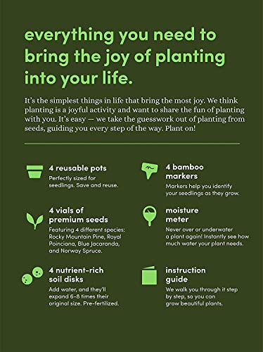 best bonsai tree growing kit
