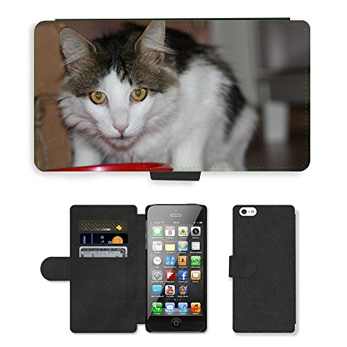 Just Phone Cases PU Leather Flip Custodia Protettiva Case Cover per // M00128930 Hangover Cat European Shorthair Cat // Apple iPhone 5 5S 5G