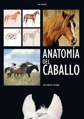 Descargar Libro Anatomía Del Caballo Anke Rüsbüldt