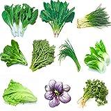 Garden Vegetable Green Organic Chinese Seeds 10