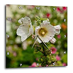 3dRose Alexis Photography - Flowers Malva Mallow - Elegant Mallows, malvaceae, Malva Flowers of White Color, on Green - 15x15 Wall Clock (DPP_319938_3)