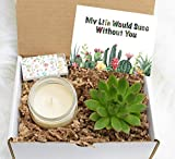 My Life Would Succ Without You Gift Box - Thank You Gift Box - Miss you Gift - Live succulent Gift Box - Thinking of You Gift - Send a gift