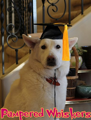 Pampered Whiskers Graduation Cap for Dogs with 16-26