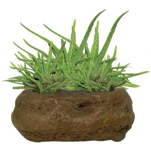 DuneCraft Rock Gardens Aloe