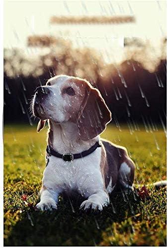 アクティビティトラッカーと水で防水犬のフィットネスインストラクター、動物4Gトラッカー30日防水超長いバッテリ寿命犬ライトファインダーBの場所,VS