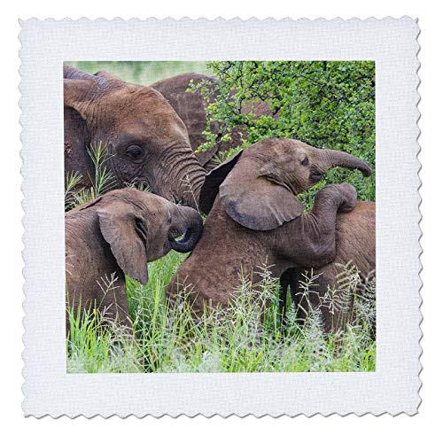 - 3dRose Danita Delimont - Elephants - Africa. Tanzania. African elephants at Tarangire National Park. - 12x12 inch quilt square (qs_312520_4)