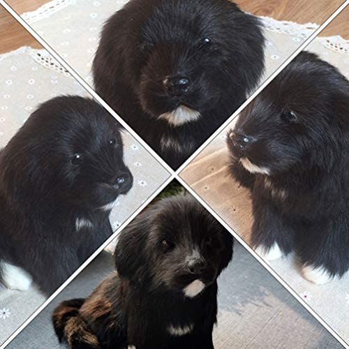 Vosarea Dog Model Figurines Labrador Miniature Black Labrador Plush Toys for Home Decoration (Black)