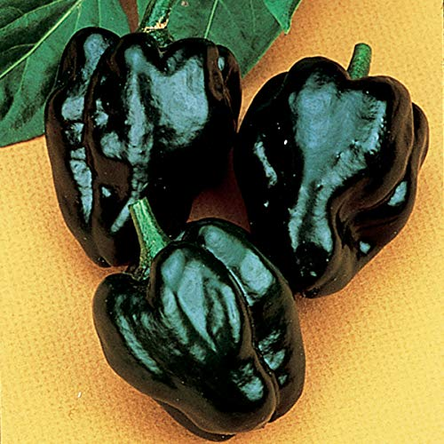 (Burpee Ancho Poblano Hot Pepper Seeds 100 seeds)