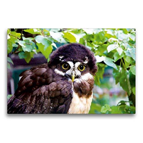 CALVENDO Toile de qualité supérieure - Motif hiboux et Bouquets - 75 x 50 cm - Toile imprimée sur Toile véritable Nature