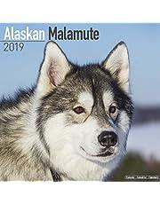 Alaskan Malamute Calendar 2019