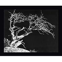 "Bodi Tree by Albert Koetsier - 11""x14"" Framed Giclee Canvas Art Print - Ready to Hang"