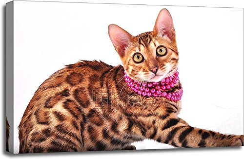 Bengal Cat And Jewellery Gallery Wrapped Canvas Art (24in. x 36in.)