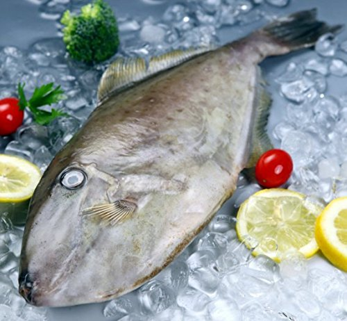 Charcoal grilled seafood snack Yellowfin Filefish filet 750 gram from South China Sea Nanhai