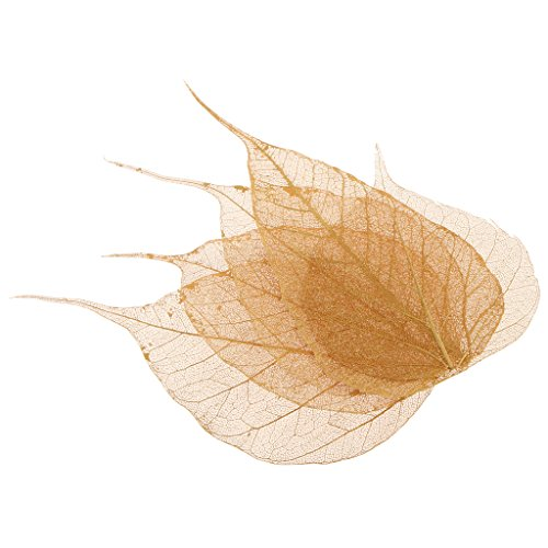 - MagiDeal 5 Pieces Natural Pressed Dried Linden Leaves Bodhi Leaf for DIY Arts and Crafts