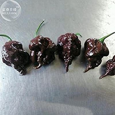 New Pepper Hot Black Carolina Reaper Chili 10+ Seeds : Garden & Outdoor