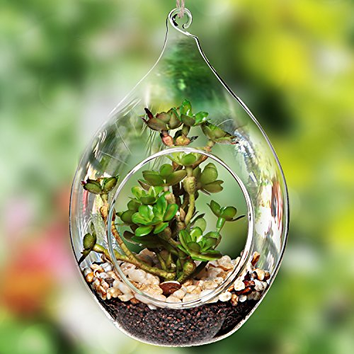 Teardrop Design Hanging Clear Glass Globe Ornament / Artificial Succulent Plant Display Terrarium Vase